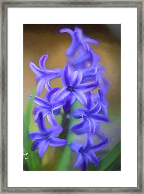 Purple Hyacinths Digital Art Framed Print by Terry DeLuco