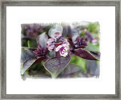 Framed Print featuring the photograph Purple In Autumn by Joan  Minchak