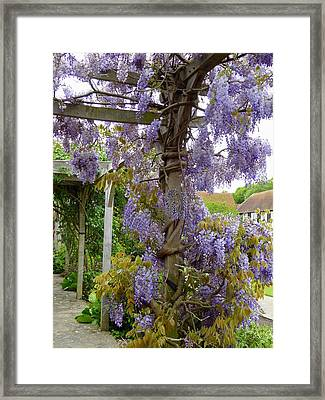 Purple In Priory Park Framed Print