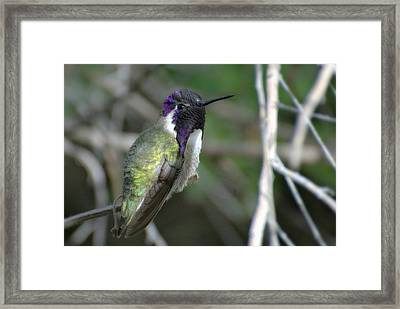 Framed Print featuring the photograph Purple Iridescence 2 by Fraida Gutovich
