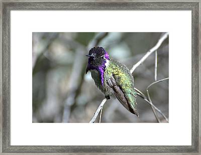 Framed Print featuring the photograph Purple Iridescence  by Fraida Gutovich