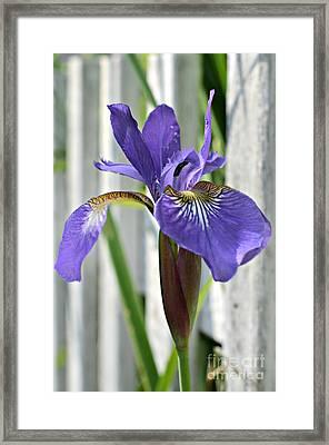 Purple Iris At The Fence Framed Print