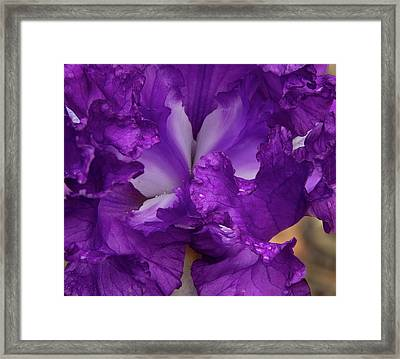 Framed Print featuring the photograph Purple Iris Close Up by Jean Noren