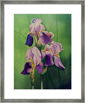 Purple Iris' Framed Print