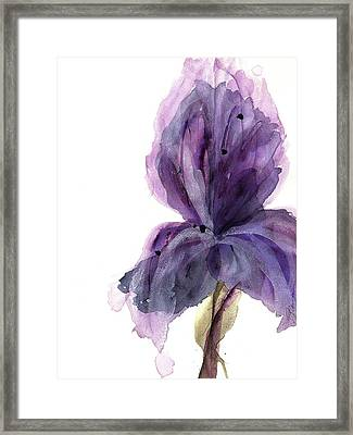 Purple Iris Framed Print by Dawn Derman