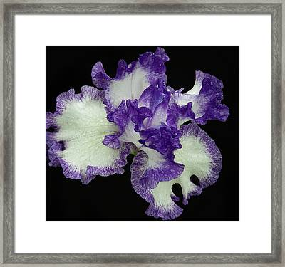 Purple Iris Frills Framed Print