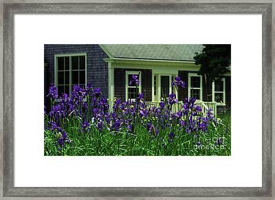 Purple Iris Garden Framed Print by Georgia Sheron