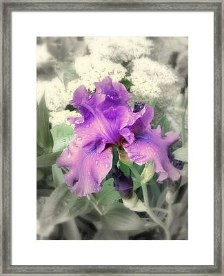 Framed Print featuring the photograph Purple Iris In Focal Black And White by Margie Avellino