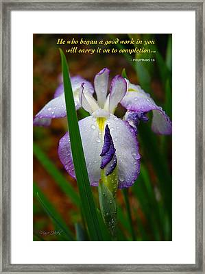 Purple Iris In Morning Dew Framed Print by Marie Hicks