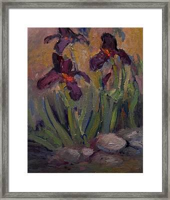 Purple Iris In Shade Framed Print by R W Goetting