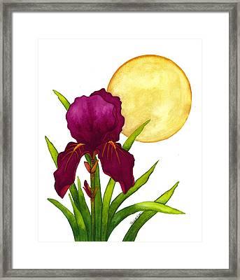 Purple Iris Framed Print by Stephanie  Jolley