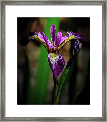 Framed Print featuring the photograph Purple Iris by Tikvah's Hope