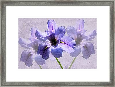 Purple Irises Framed Print by Rosalie Scanlon
