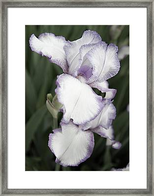 Purple Is Passion Framed Print by Sherry Hallemeier