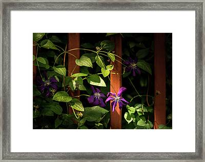 Framed Print featuring the photograph Purple Jackmanii Clematis by Onyonet  Photo Studios