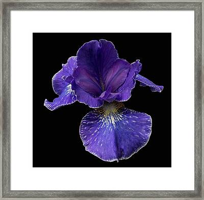 Framed Print featuring the photograph Purple Japanese Iris by Jean Noren