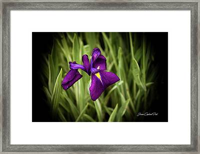 Framed Print featuring the photograph Purple Japanese Iris by Joann Copeland-Paul