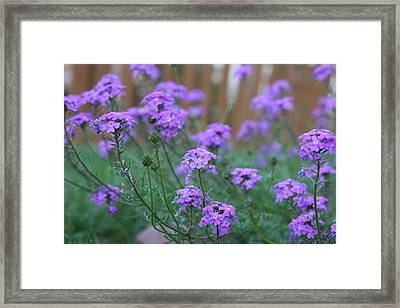 Purple Framed Print by Jonathan Kotinek