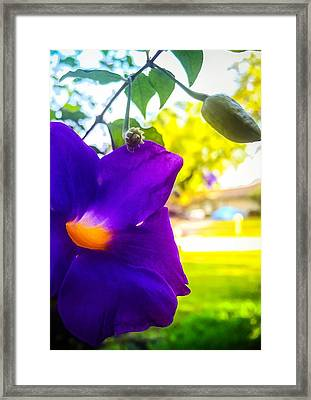 Purple King Framed Print by Kendall Tabor