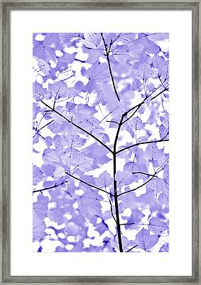 Purple Lavender Leaves Melody Framed Print by Jennie Marie Schell
