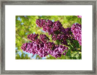 Purple Lilac 1 Framed Print by Jean Bernard Roussilhe