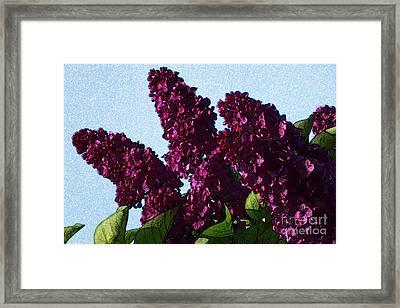 Purple Lilac 3 Framed Print by Jean Bernard Roussilhe