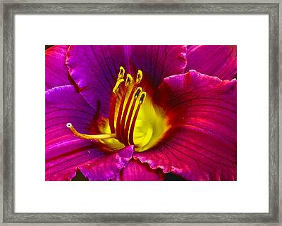 Framed Print featuring the photograph Purple Lily by Bill Barber