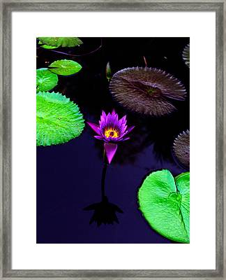 Purple Lily Framed Print by Gary Dean Mercer Clark