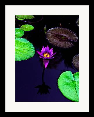 Lily Framed Prints