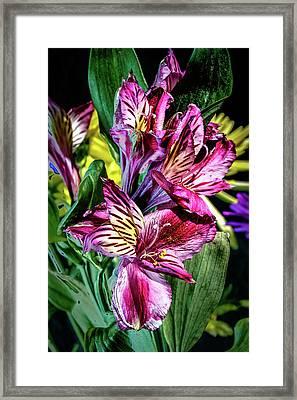 Purple Lily Framed Print by Mark Dunton