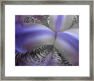 Purple Lines Framed Print by Michele Caporaso