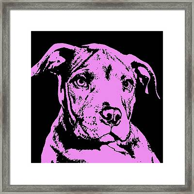 Purple Little Pittie Framed Print by Dean Russo