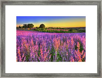 Purple Love Framed Print by Midori Chan