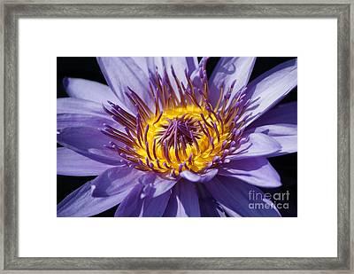 Purple Magic   # Framed Print by Rob Luzier