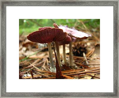 Purple Mushroom 2 Framed Print by J M Farris Photography