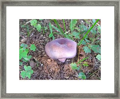 Purple Mushroom 2 Framed Print by Karen Roberson