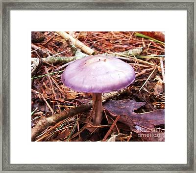 Purple Mushroom Framed Print by Jean Fry