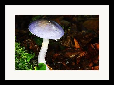 Charcoal Burner Mushroom Framed Prints