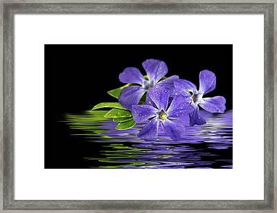 Purple Myrtle Reflection Framed Print