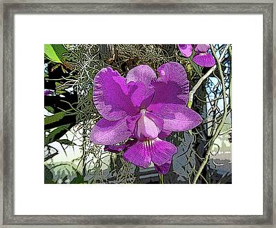 Purple Orchid Framed Print by Adina Campbell