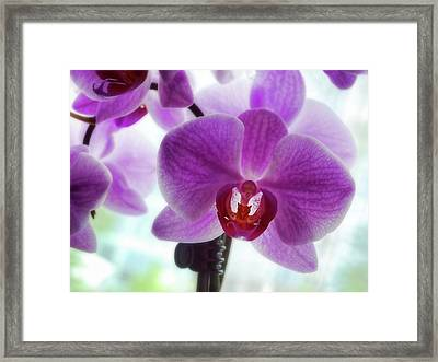 Purple Orchid Framed Print by Ann Powell
