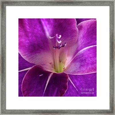 Framed Print featuring the photograph Purple Orchid Close Up by Kim Nelson