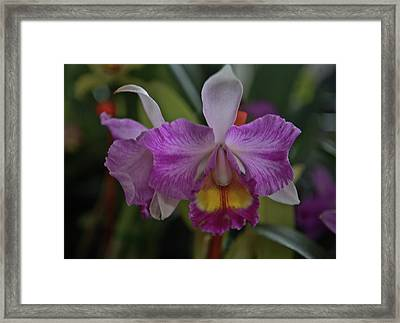 Purple Orchid Framed Print by Liz Santie