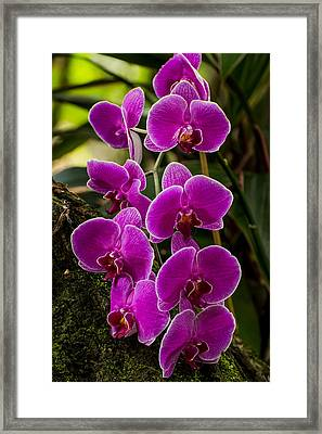 Purple Orchid Framed Print by Zina Stromberg