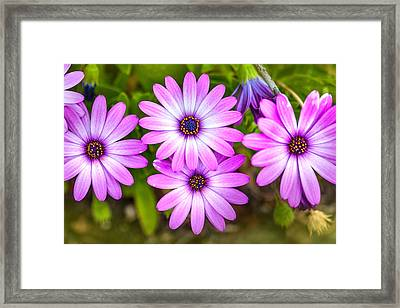 Purple Pals Framed Print by Az Jackson