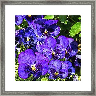 Purple Pansies In Morning Light Framed Print