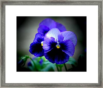 Purple Pansy - 8x10 Framed Print by B Nelson