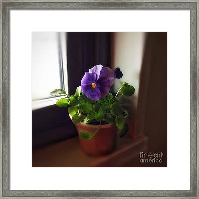 Purple Pansy On My Windowsill Framed Print by Patricia E Sundik