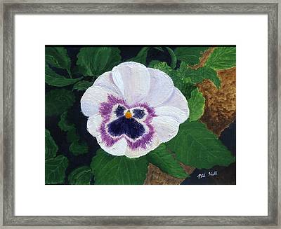Purple Pansy Framed Print by Philip Hall