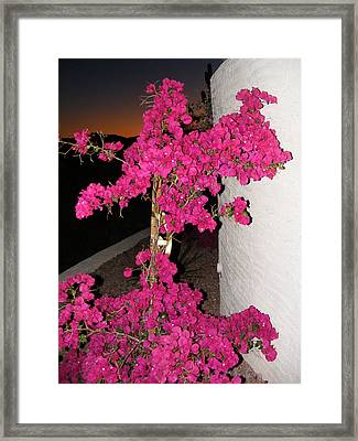 Purple Passion Against Desert Sunset Framed Print by Adam Cornelison